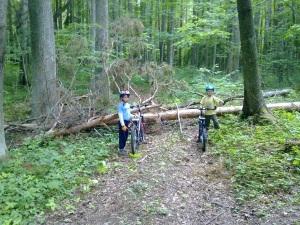 Langenud puu RMK matkarajal
